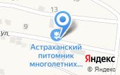 Астраханский питомник многолетних цветов и декоративных кустарников