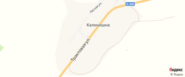 Лесная улица на карте села Калинишны с номерами домов