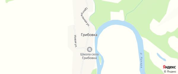 Карта села Грибовки в Амурской области с улицами и номерами домов
