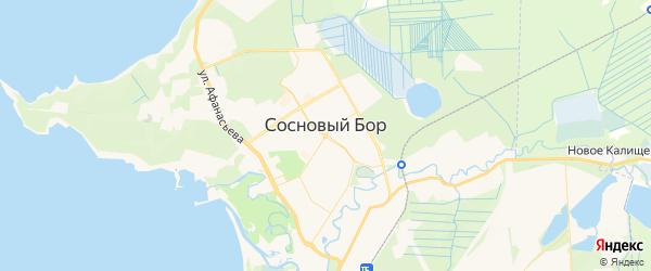 Карта Соснового Бора с районами, улицами и номерами домов: Сосновый Бор на карте России