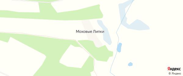 Карта поселка Моховые Липки в Брянской области с улицами и номерами домов