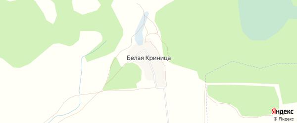 Карта поселка Белой Криницы в Брянской области с улицами и номерами домов