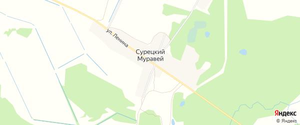 Карта поселка Сурецкого Муравья в Брянской области с улицами и номерами домов