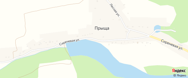 Сиреневая улица на карте деревни Прыща с номерами домов