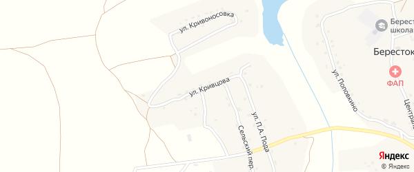 Улица Кривцова на карте села Берестка с номерами домов