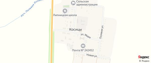Территория Паи 322222010194 на карте поселка Косицы с номерами домов