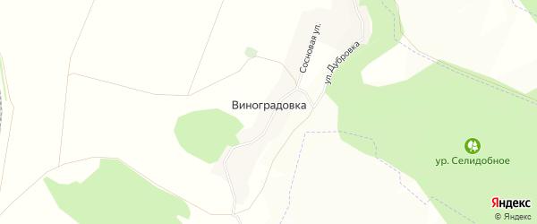 Карта хутора Виноградовки в Белгородской области с улицами и номерами домов