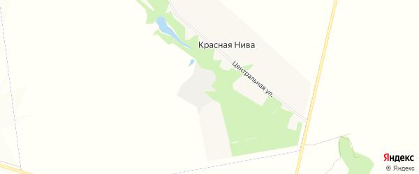 Карта села Красной Нивы в Белгородской области с улицами и номерами домов