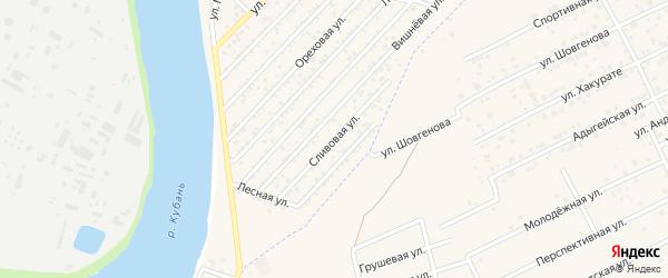 Сливовая улица на карте садового некоммерческого товарищества Дружбы (аула Старобжегокая) с номерами домов