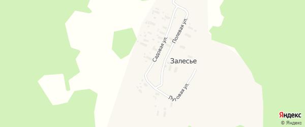Полевая улица на карте деревни Залесья с номерами домов