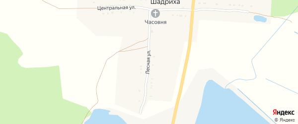 Лесная улица на карте деревни Шадрихи с номерами домов