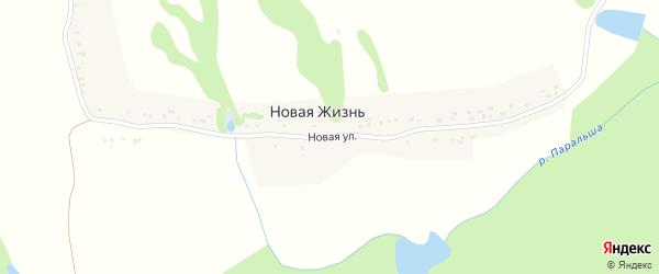 Новая улица на карте поселка Новой жизни с номерами домов