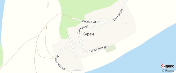 Береговая улица на карте деревни Куреча с номерами домов