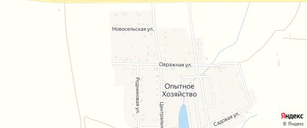 Овражная улица на карте деревни Опытного хозяйства с номерами домов