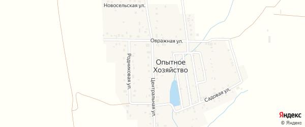 Центральная улица на карте деревни Опытного хозяйства с номерами домов