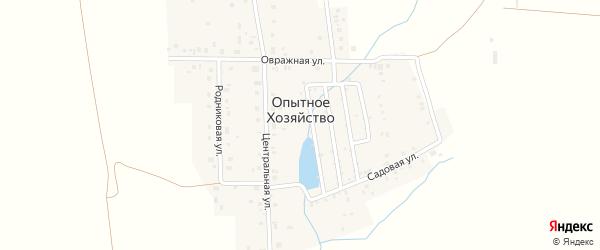Радужная улица на карте деревни Опытного хозяйства с номерами домов