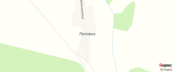 Лесная улица на карте деревни Липовки с номерами домов