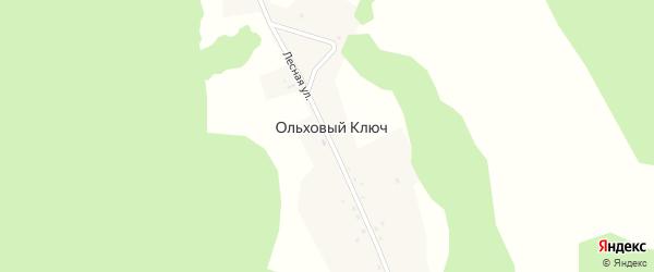 Лесная улица на карте деревни Ольхового Ключа с номерами домов