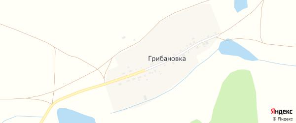 Центральная улица на карте деревни Грибановки с номерами домов