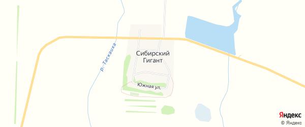 Карта поселка Сибирского Гиганта в Алтайском крае с улицами и номерами домов