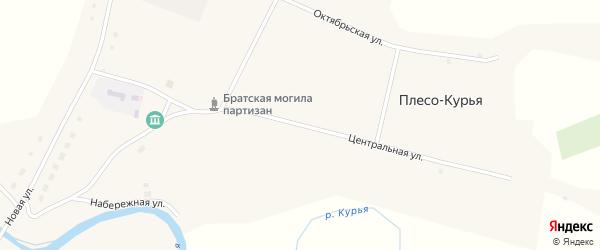 Центральная улица на карте села Плеса-Курьи с номерами домов