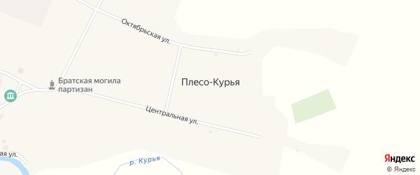 Новая улица на карте села Плеса-Курьи с номерами домов
