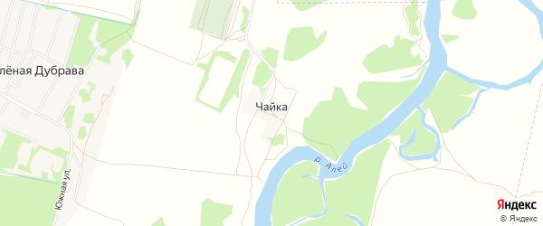 Карта поселка Чайки в Алтайском крае с улицами и номерами домов