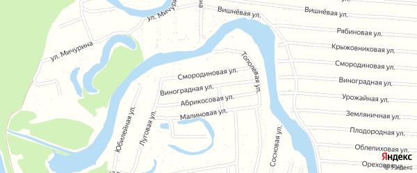 Виноградная улица на карте садового некоммерческого товарищества N 8 с номерами домов