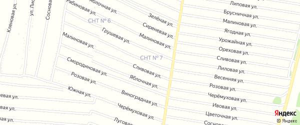 Овощная улица на карте садового некоммерческого товарищества N 7 с номерами домов