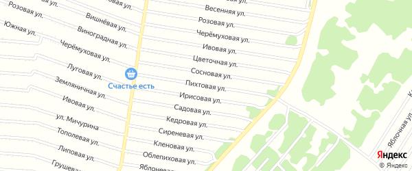 Пихтовая улица на карте садового некоммерческого товарищества N 11 с номерами домов