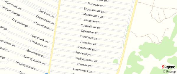 Сливовая улица на карте садового некоммерческого товарищества N 5 с номерами домов