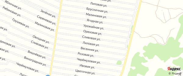 Сливовая улица на карте садового некоммерческого товарищества N 3 с номерами домов