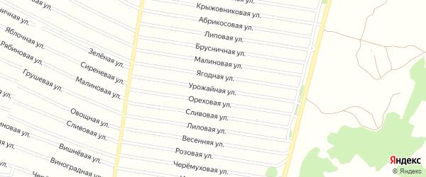 Урожайная улица на карте садового некоммерческого товарищества N 13 с номерами домов