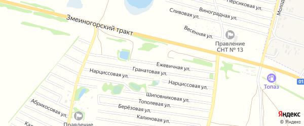Ежевичная улица на карте садового некоммерческого товарищества N 8 с номерами домов
