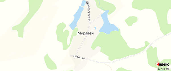 Карта села Муравья в Алтайском крае с улицами и номерами домов