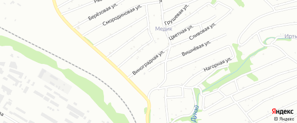 Виноградная улица на карте садового некоммерческого товарищества Просвещенца с номерами домов