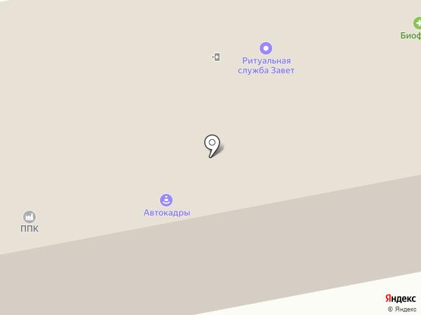Хвостатый модник на карте Калуги