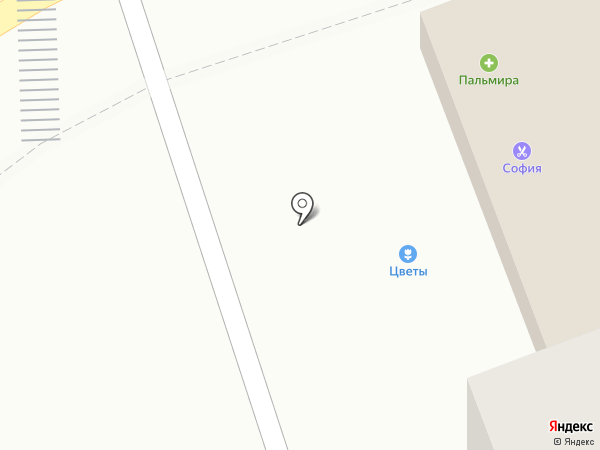 Пальмира на карте Старой Купавны