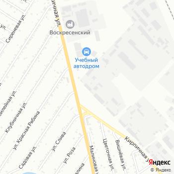 Древо на Яндекс.Картах