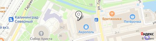 Красотка на карте Калининграда