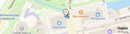 Stefani на карте Калининграда