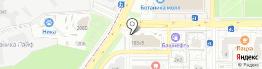 Кипарис на карте Екатеринбурга