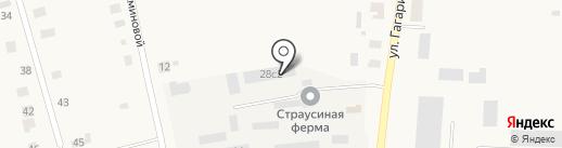 Тюменский страус на карте Чикчи