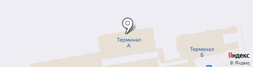 Сибирский кедр на карте Оби
