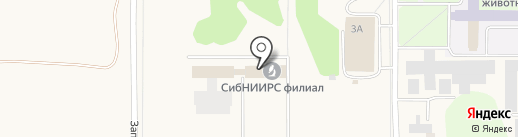 Русская чёрная водка на карте Краснообска