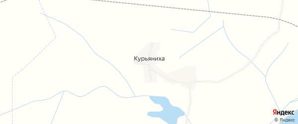 Карта деревни Курьяниха в Псковской области с улицами и номерами домов