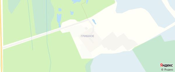 Карта деревни Грибного в Ленинградской области с улицами и номерами домов
