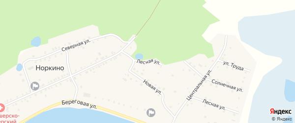 Лесная улица на карте деревни Норкино с номерами домов