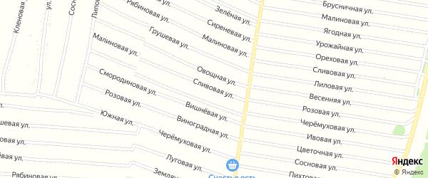Сливовая улица на карте садового некоммерческого товарищества N 7 с номерами домов