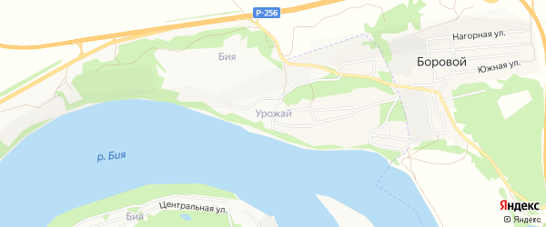 Карта садового некоммерческого товарищества Урожая города Бийска в Алтайском крае с улицами и номерами домов